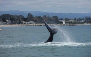 oneill-yacht-charters-whale-santa-cruz