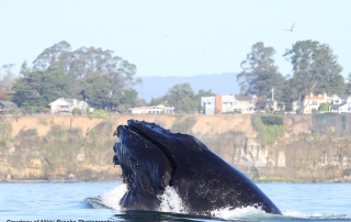 santa-cruz-whale-nikki-brooks-photo