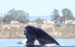 santa-cruz-whale-nikki-brooks-photo